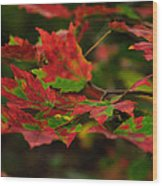 Red And Green Autumn Leaves Wood Print