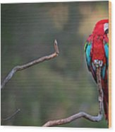 Red-and-green Macaw Sitting On Branch Wood Print