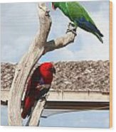 Red And Green Parrots Wood Print
