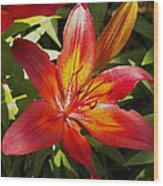 Red And Orange Lilly In The Garden Wood Print