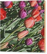 Red And Purple Tulips Wood Print