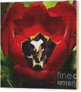 Red And Tulip Wood Print by Rebecca Christine Cardenas