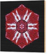 Red And White Amaryllis Iv Flower Mandala Wood Print
