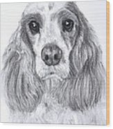 Red And White Cocker Spaniel Wood Print