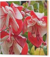 Red And White Delight Wood Print