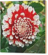 Red And White Flower Wood Print