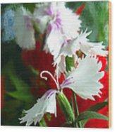 Dianthus Wood Print