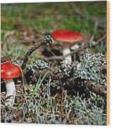 Red And White Mushrooms Wood Print