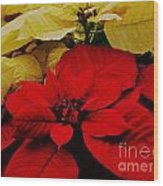 Red And White Poinsettias Wood Print