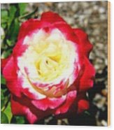Red And White Rose Wood Print