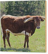 Red And White Texas Longhorn Bull Wood Print