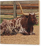 Red And White Texas Longhorn Wood Print