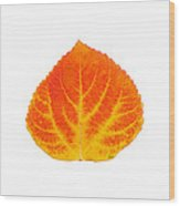 Red And Yellow Aspen Leaf 5 Wood Print