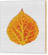 Red And Yellow Aspen Leaf 6 Wood Print