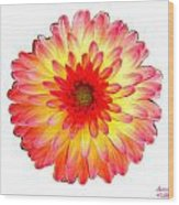 Red And Yellow Dahlia Wood Print