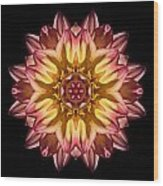Red And Yellow Dahlia Iv Flower Mandala Wood Print