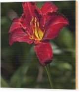 Red And Yellow Daylily  Wood Print