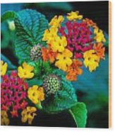 Red And Yellow Flowers Wood Print