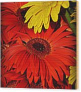 Red And Yellow Glory - The Flowers Of Summer - Gerbera Daisies Wood Print