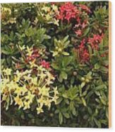 Red And Yellow In St Lucia Wood Print