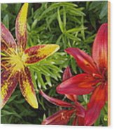 Red And Yellow Lilly Flowers In The Garden Wood Print