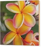 Plumeria Smoothie Wood Print