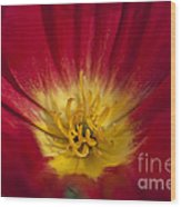 Red And Yellow Poppy 1 Wood Print