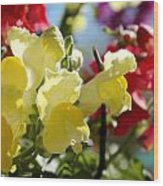 Red And Yellow Snapdragons II Wood Print by Aya Murrells