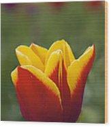 Red And Yellow Tulip Closeup Wood Print