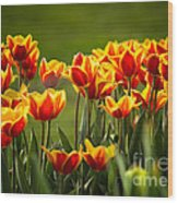 Red And Yellow Tulips II Wood Print
