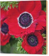 Red Anemone. Flowers Of Holland Wood Print