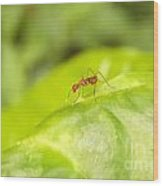 Red Ant On Green Leaf Wood Print