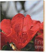 Red April Wood Print