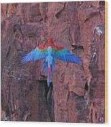 Red Arara Wood Print