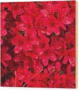Red Azalias Wood Print