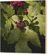 Red Baneberry   #8955 Wood Print