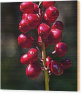 Red Baneberry   #8986 Wood Print