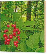 Red Baneberry Along Rivier Du Nord Trail In The Laurentians-qc Wood Print