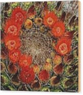 Red Barell Cactus Flowers Wood Print