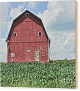Red Barn And New Corn Wood Print