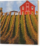 Red Barn In Autumn Vineyards Wood Print