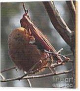 Red Bat Roost Wood Print