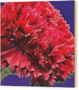 Red Beauty Carnation Wood Print