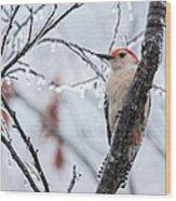 Red Bellied Woodpecker In Winter Wood Print