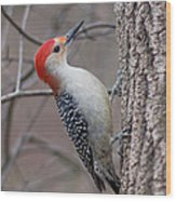 Red Bellied Woodpecker Pose Wood Print