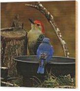 Red- Bellied Woodpecker Wood Print