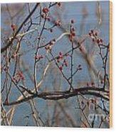 Red Berries 2 Wood Print