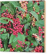 Red Berries And Green Leaves Wood Print
