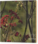 Red Berries Wood Print