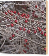 Red Berries Covered In Snow Wood Print